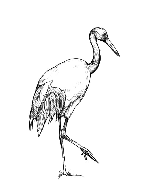 600x800 Crane Bird Netart