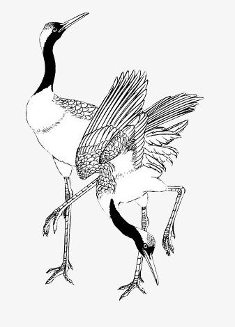 337x470 Crane Stick Figure, Chinese Style, Crane, Animal Png Image