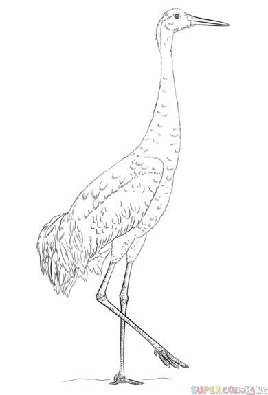 390x575 The Best Crane Drawing Ideas On Body Drawing