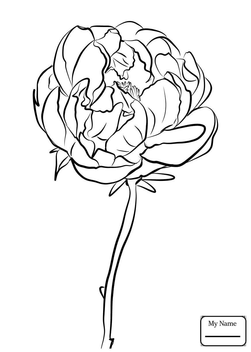 874x1224 Chinese Peony Peony Flowers Peony Coloring Pages For Kids