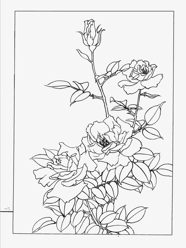 650x868 Chinese Rose, Flower Artwork, Line Drawing Png Image For Free Download