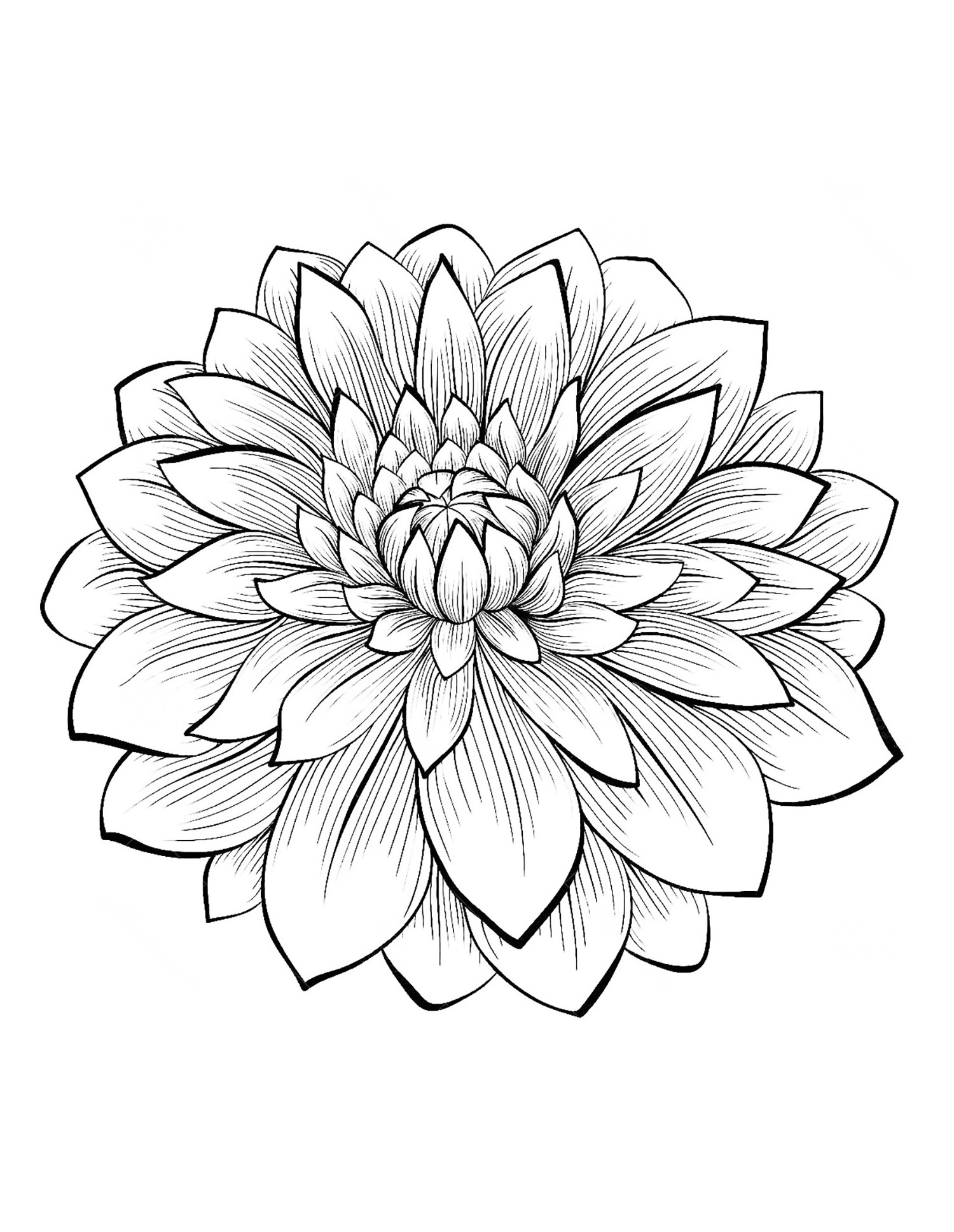 1500x1937 Dahlia Flower Flowers Coloring Pages For Kids To Print Amp Color