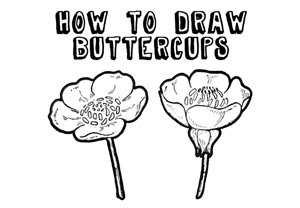 300x208 How To Draw Flowers Drawing Tutorials Amp Drawing Amp How To Draw