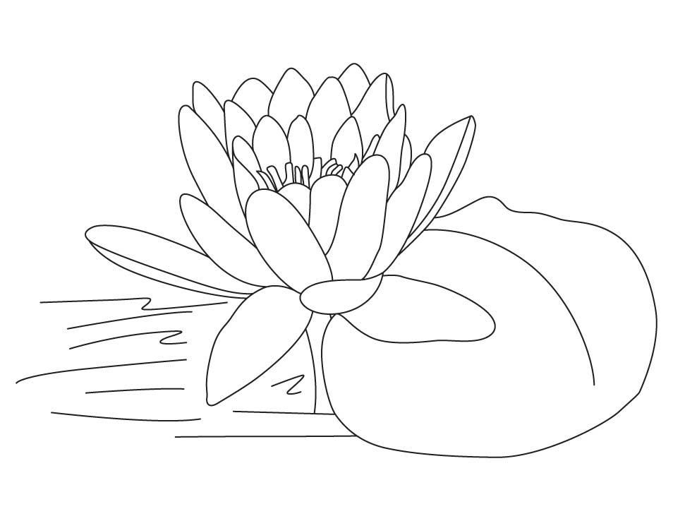 954x738 Lotus Flower Coloring Pages