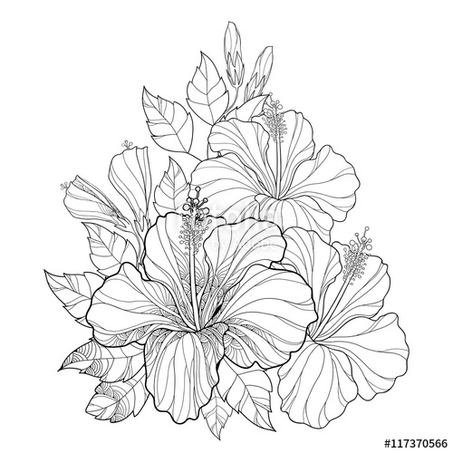 500x500 Vector Bouquet With Chinese Hibiscus Or Hibiscus Rosa Sinensis