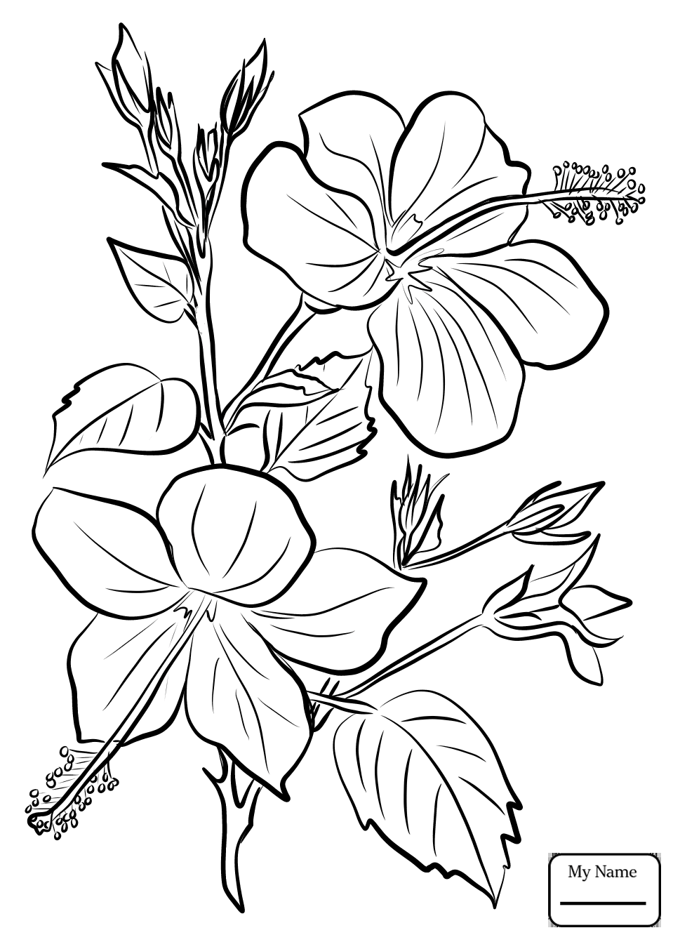 chinese flowers drawing at getdrawings com free for personal use