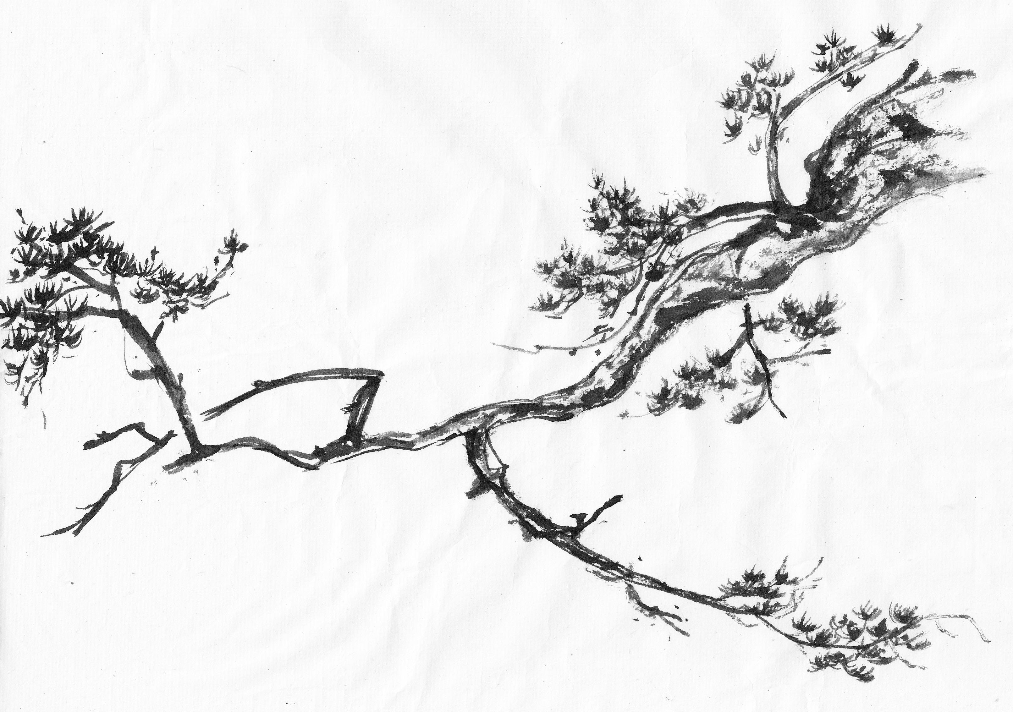 3223x2266 Painting Trees Study