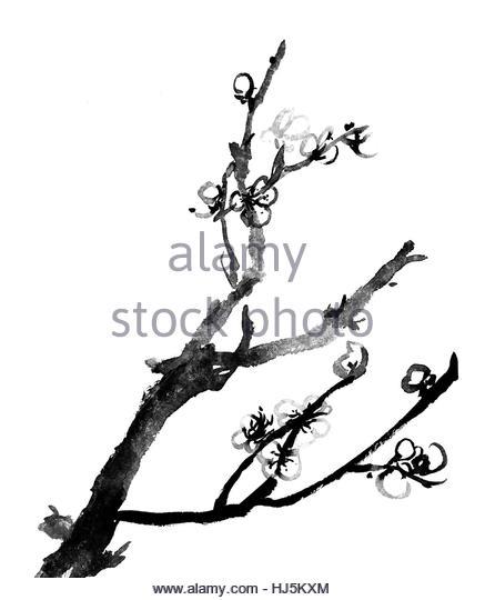 437x540 Chinese Plum Blossom Painting Stock Photos Amp Chinese Plum Blossom