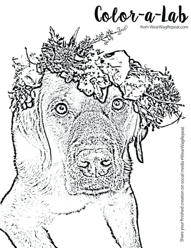 610x789 Labrador Retriever Coloring Pages Also Golden Retriever Puppies