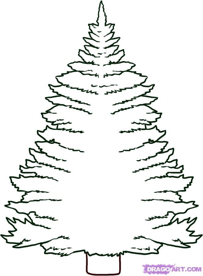 667x903 Christmas Tree Drawing#535663