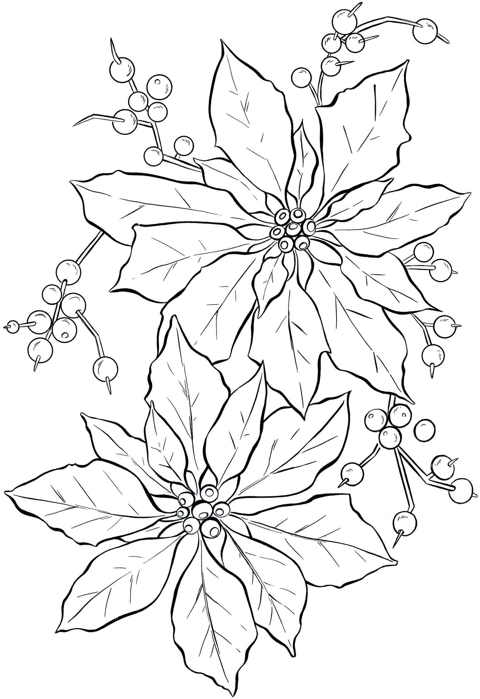Christmas Flowers Drawing