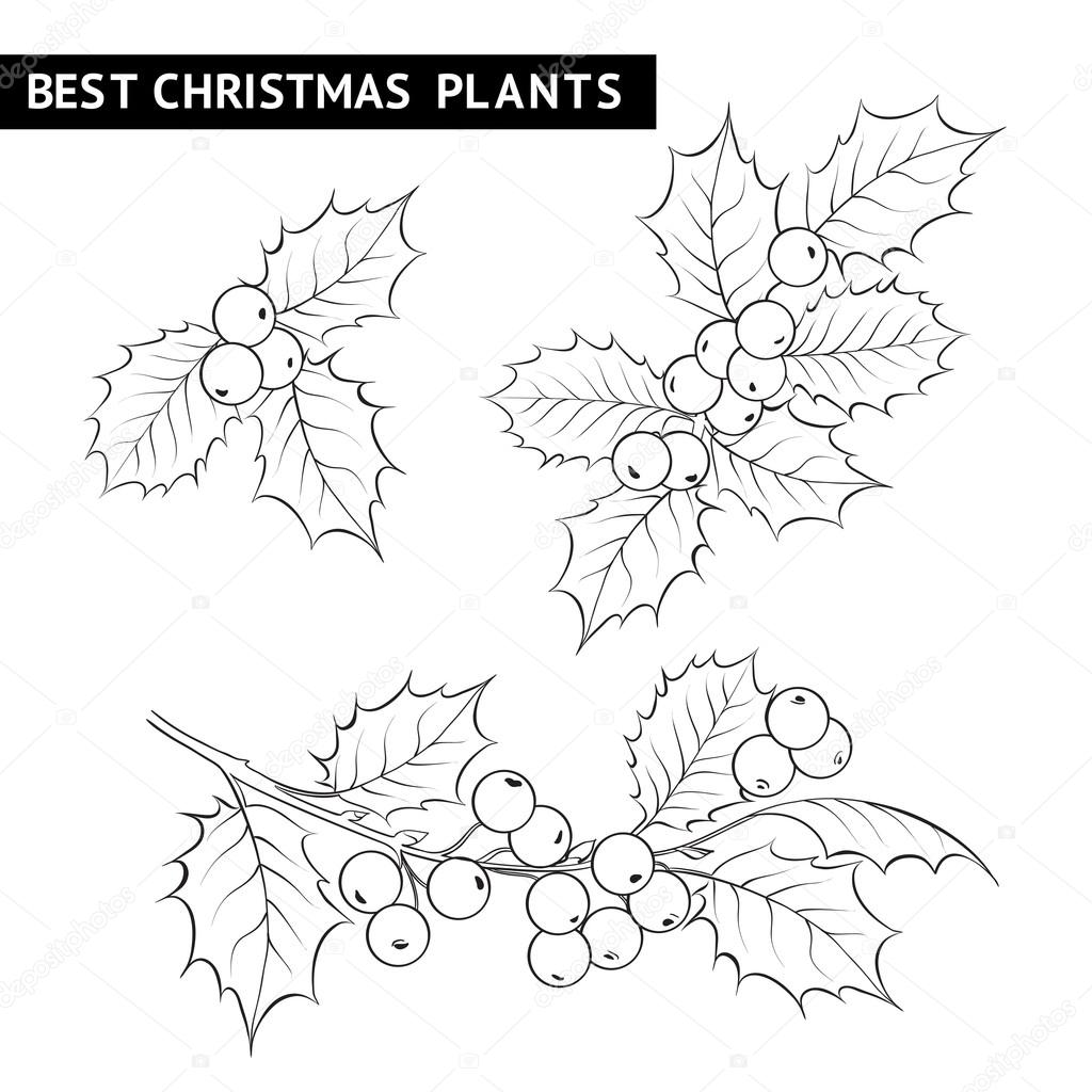 1024x1024 Christmas Mistletoe Branch Drawing. Stock Vector Kotkoa