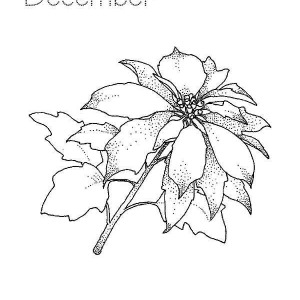 300x300 Christmas Poinsettia For Poinsettia Day Coloring Page Christmas