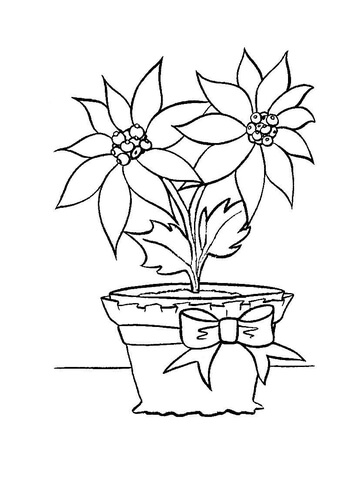 355x480 Christmas Flower In In A Pot Coloring Page Free Printable