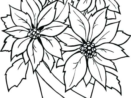 440x330 Poinsettia Coloring Pages Poinsettia Coloring Page Poinsettia