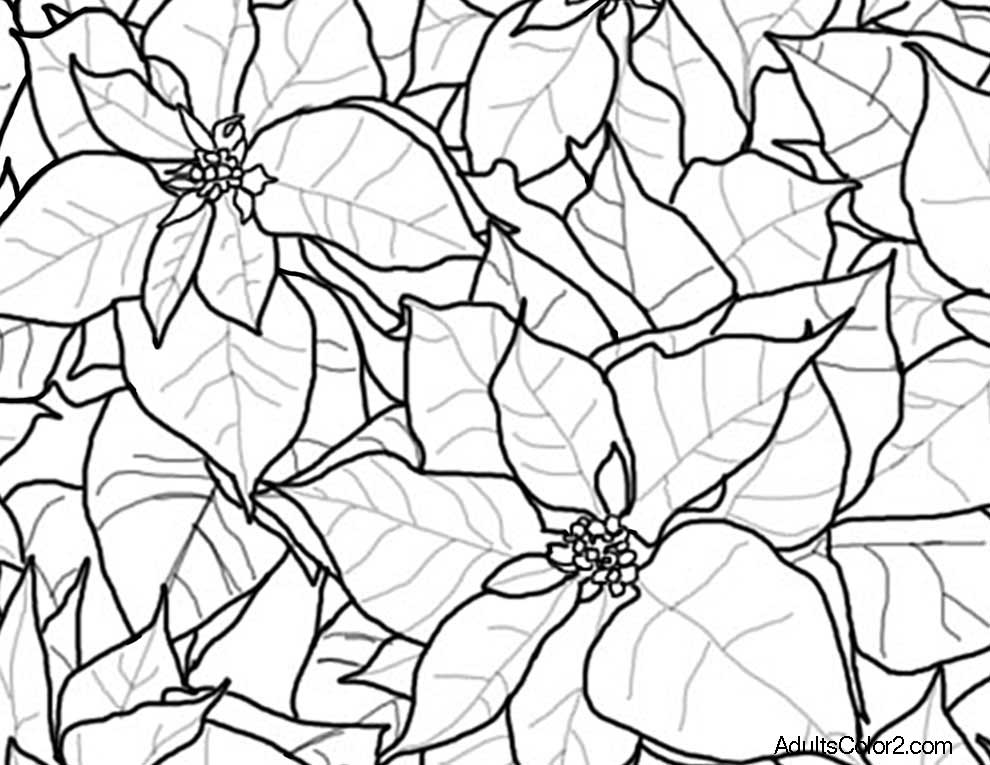 990x765 Christmas Flowers Coloring Pages