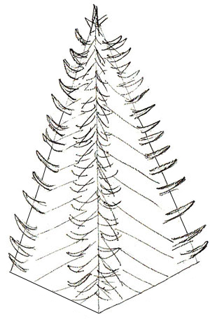 300x464 How To Draw A Christmas Tree