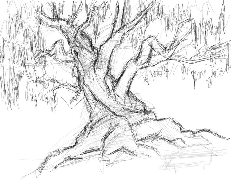 736x600 59 Best How To Draw Realistic Trees, Plants Bushes And Rocks