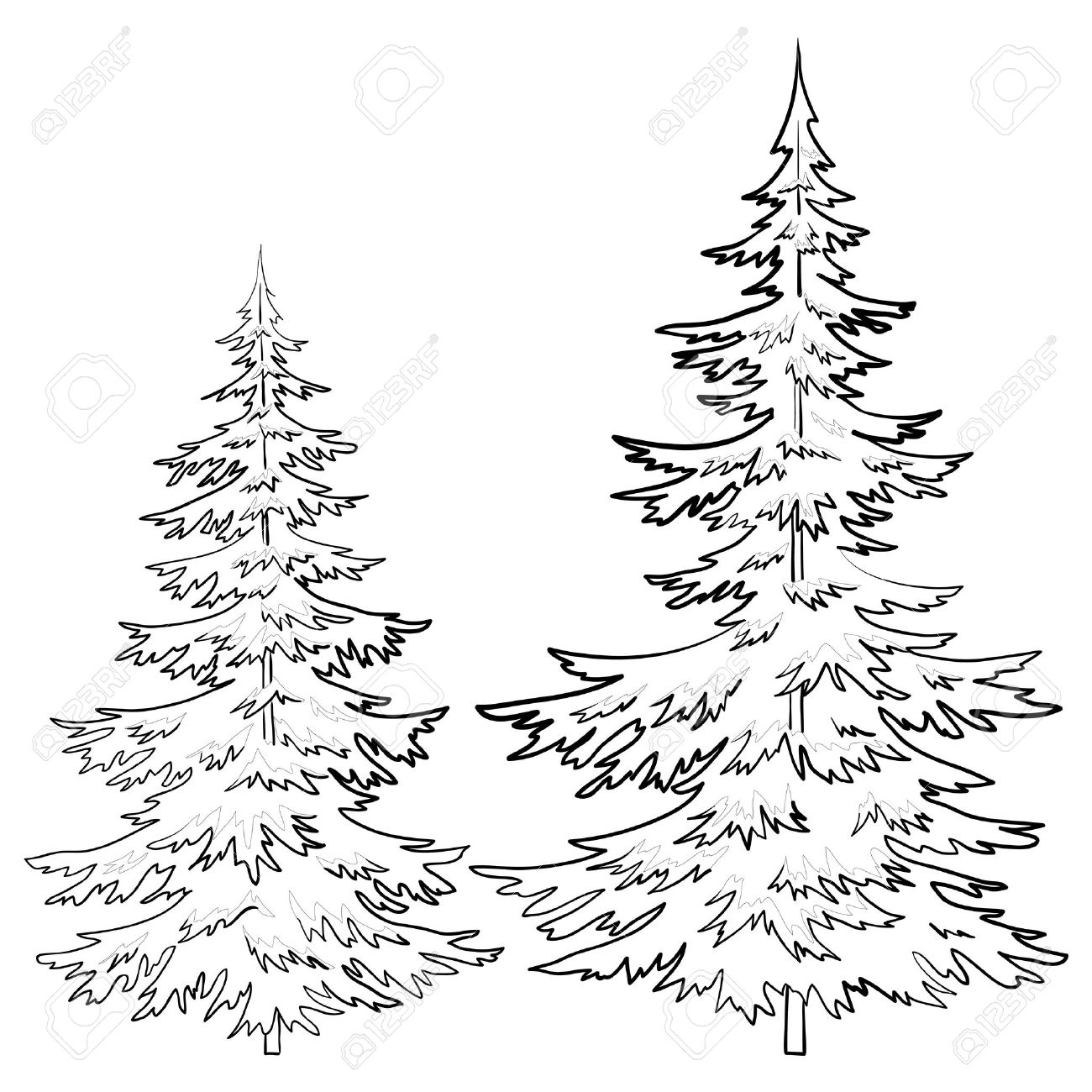 1300x1300 Evergreen Tree Outline Collection