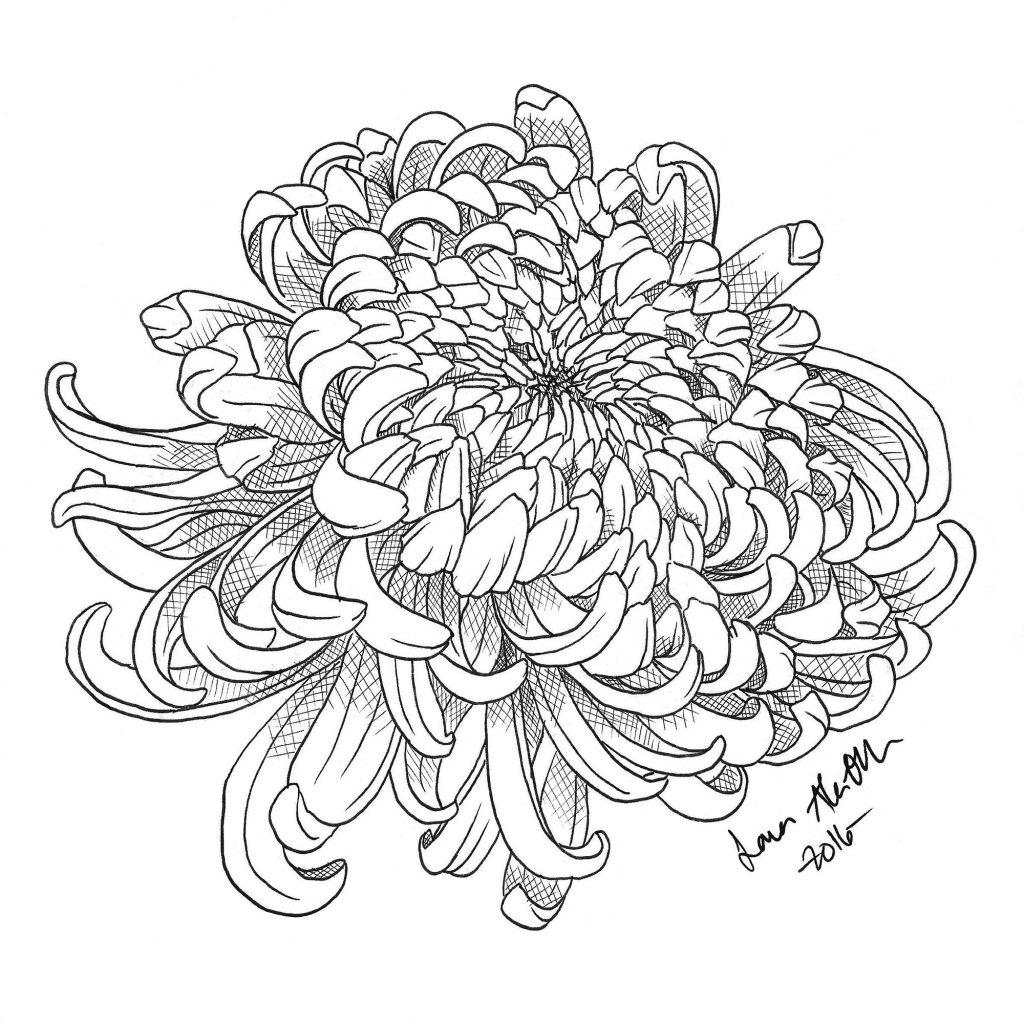 Chrysanthemum Flower Line Drawing : Chrysanthemum drawing at getdrawings free for