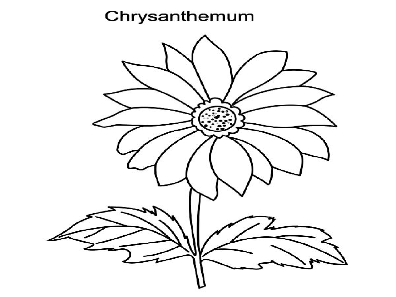 Chrysanthemum Flower Drawing at GetDrawings.com | Free for personal ...