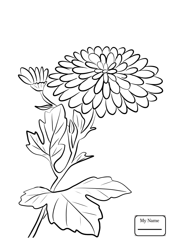 866x1224 Coloring Pages Chrysanthemum 3 Chrysanthemums Flowers
