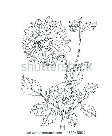 chrysanthemum flower drawing at getdrawings com free for personal