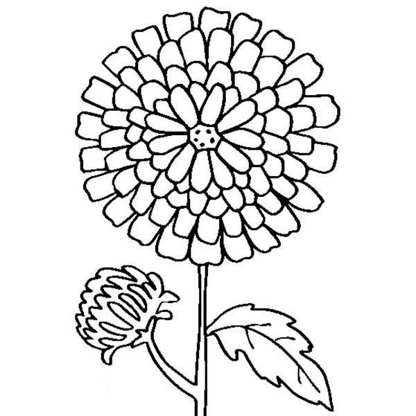 600x600 Chrysanthemum Drawing Coloring Page Sun