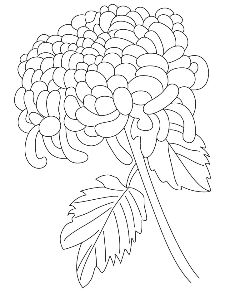 Chrysanthemums Drawing at GetDrawings.com | Free for personal use ...