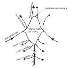 240x230 Neuroscience