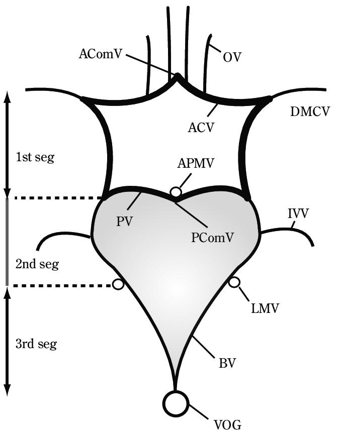670x866 Venous Circle Of Trolard And The Three Basal Vein Segments Similar