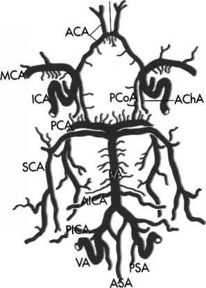 297x415 Anatomy Of The Cerebral Venous System 1 General Considerations