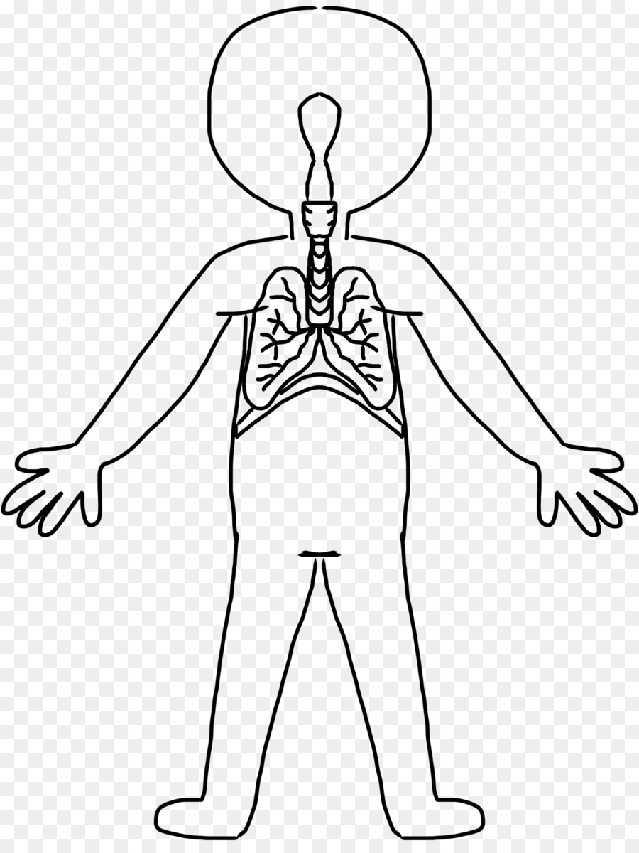 900x1200 Human Body Human Skeleton Circulatory System Organ System Clip Art