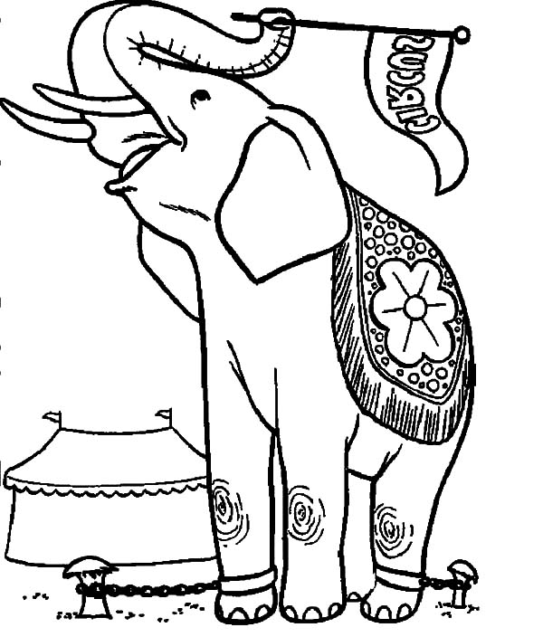 600x704 Circus Elephant Waving Circus Flag Coloring Pages Best Place