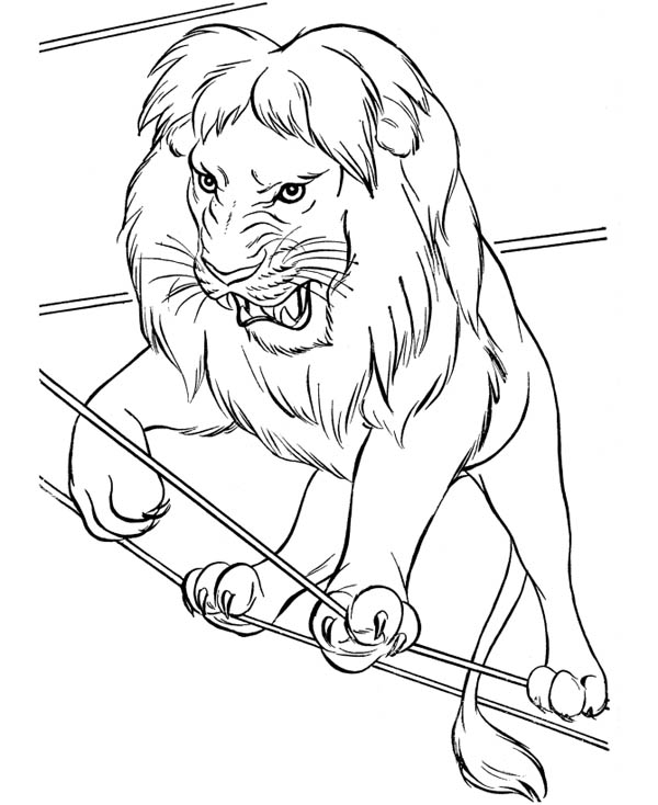 600x734 Circus Lion Walking On Rope Coloring Page Color Luna