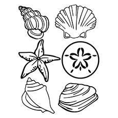 Clam Drawing