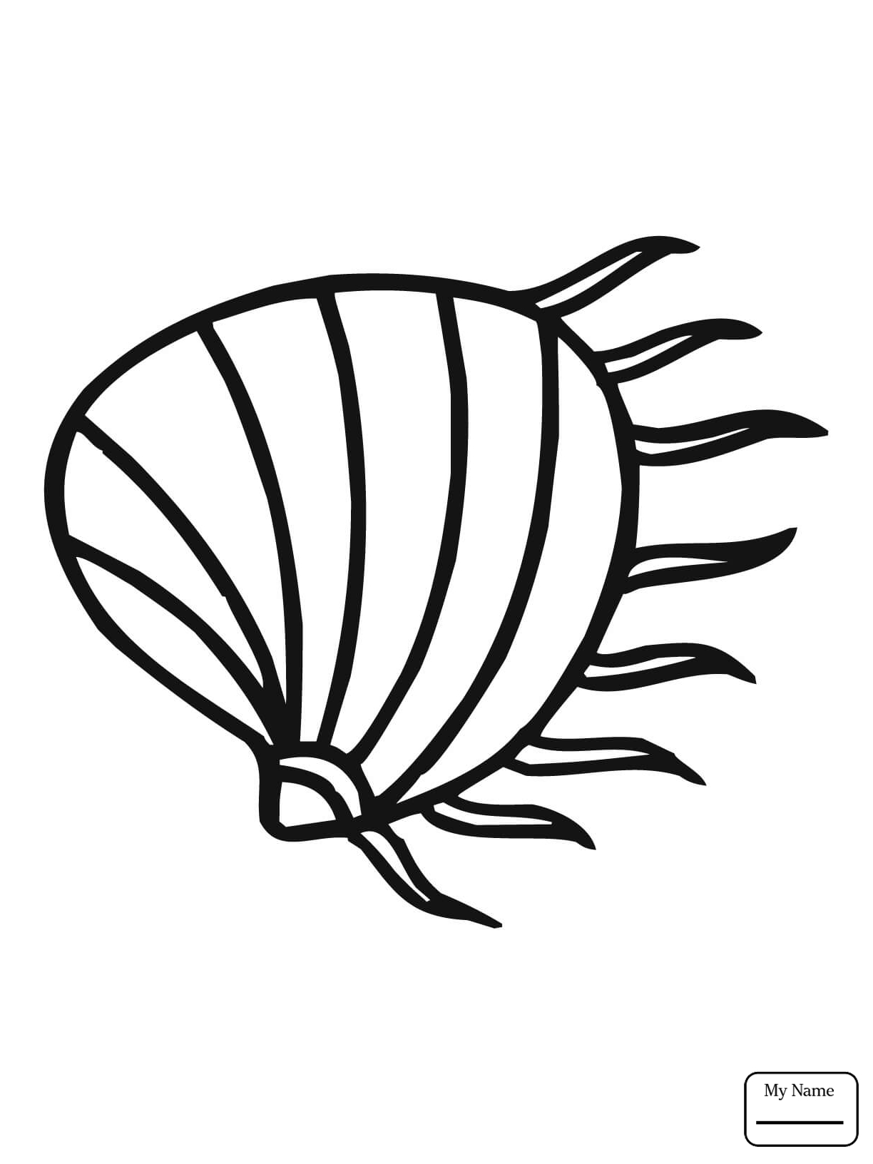 Clam Shell Drawing at GetDrawings