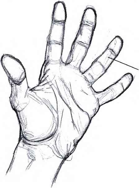 448x604 How Draw Open Hand Step Step Drawing Hands Open