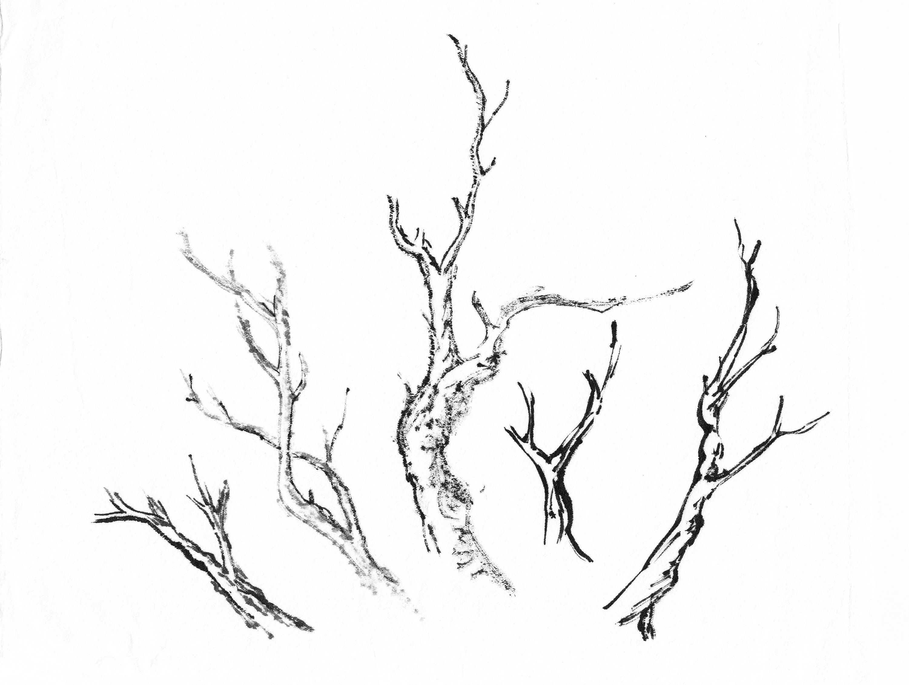 3002x2265 Branches Drawing