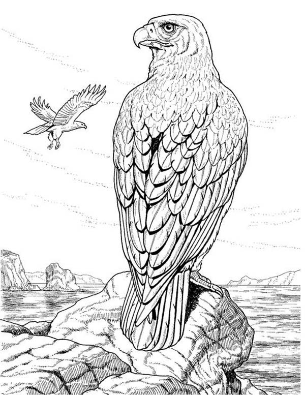 600x777 Eagle Standing On The Edge Of Cliff Coloring Page Coloring Sun