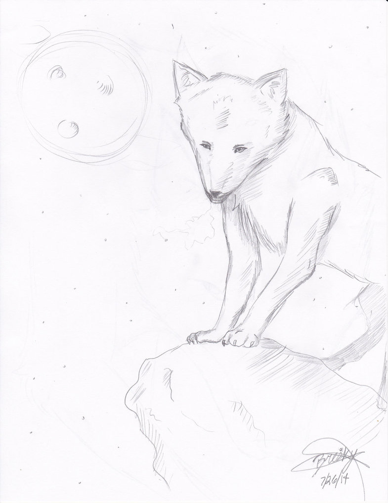785x1017 Wolf On A Cliff