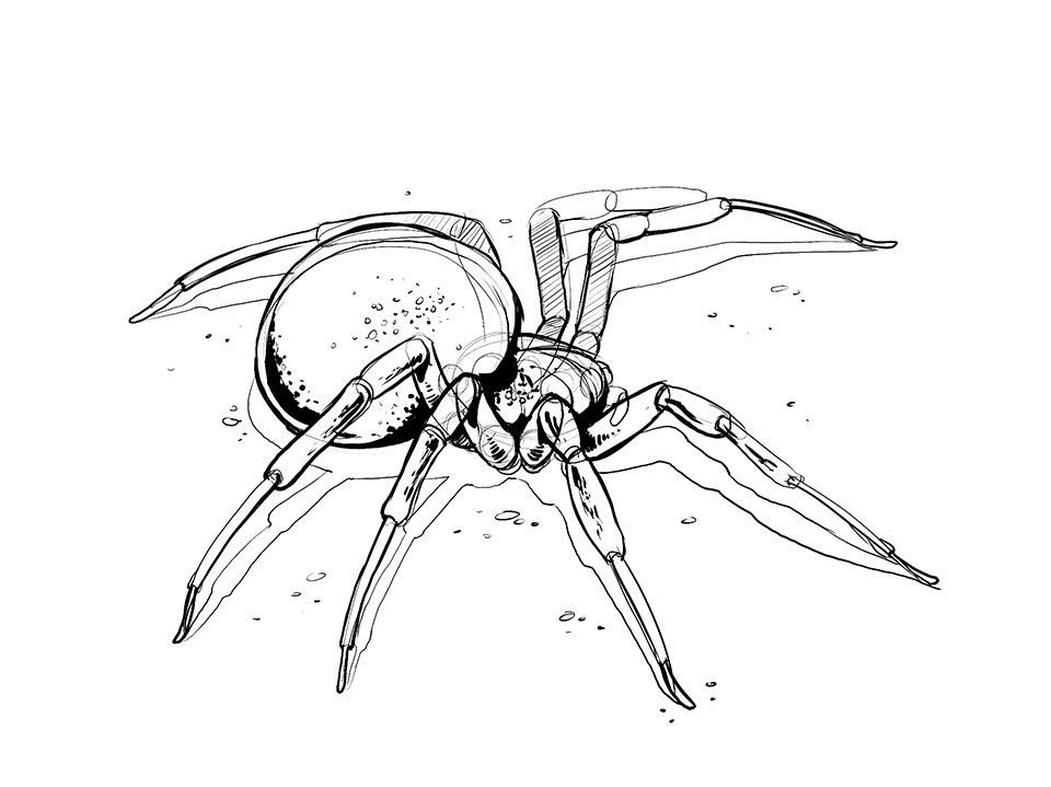 960x719 Lesson 4 Drawing Insects And Arachnids