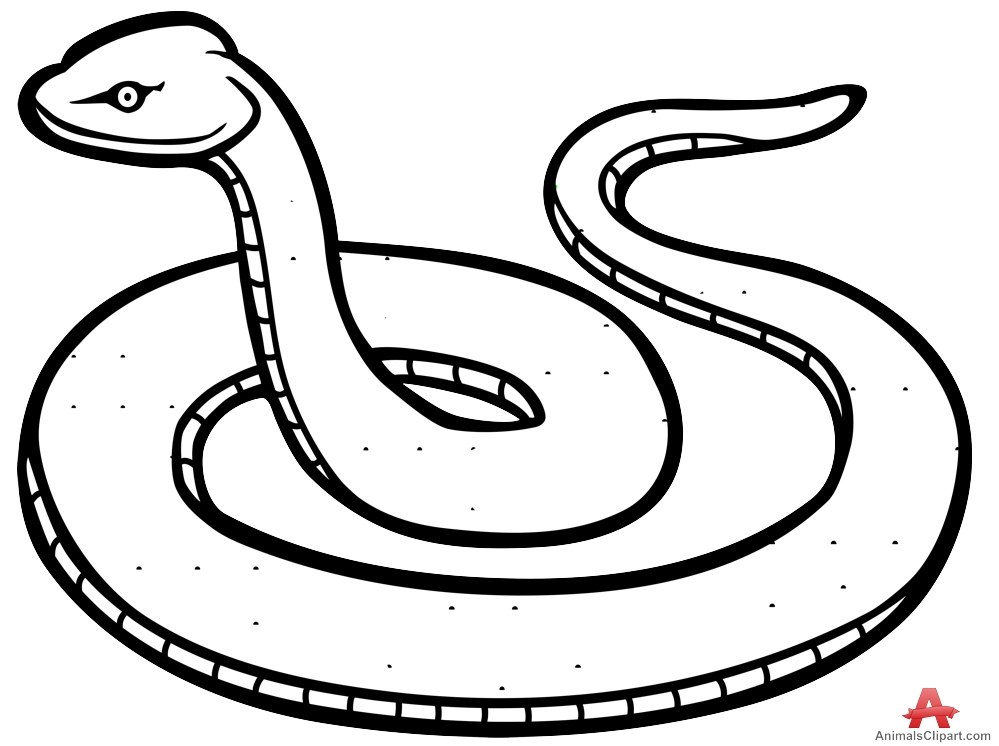 999x746 Snake Drawing Clipart