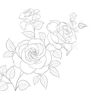Closed Rose Drawing