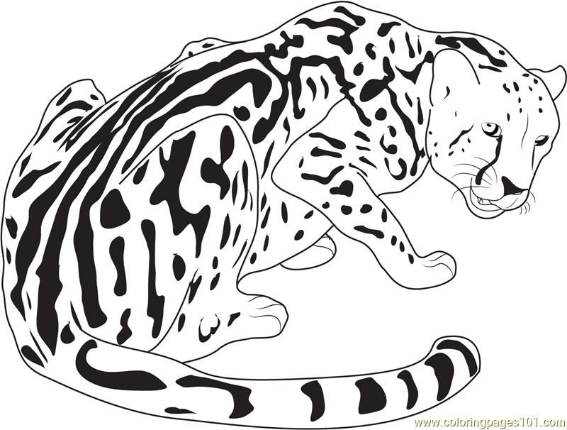 800x606 King Cheetah Coloring Page