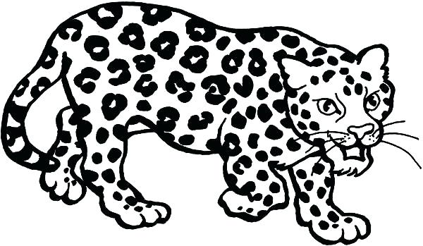 600x349 Leopard Coloring Pages Leopard Sneaking Coloring Pages Baby Snow