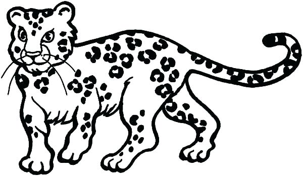 600x349 Snow Leopard Coloring Pages Snow Leopard Colouring Sheet
