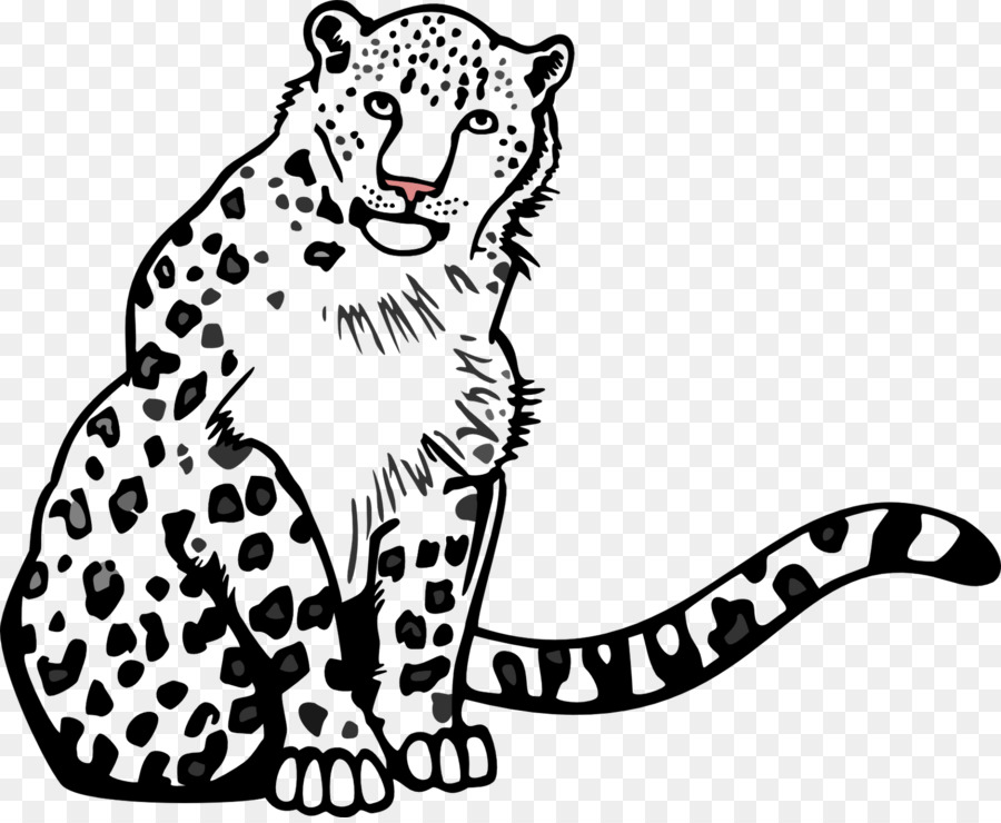 900x740 Snow Leopard Cheetah Clouded Leopard Felinae