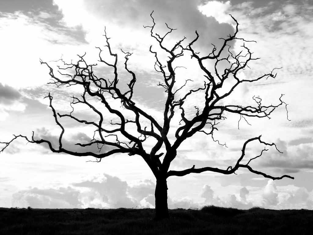 1024x768 Other Landscape Sky Dry Nature Tree Wallpapers For Hd 169 High