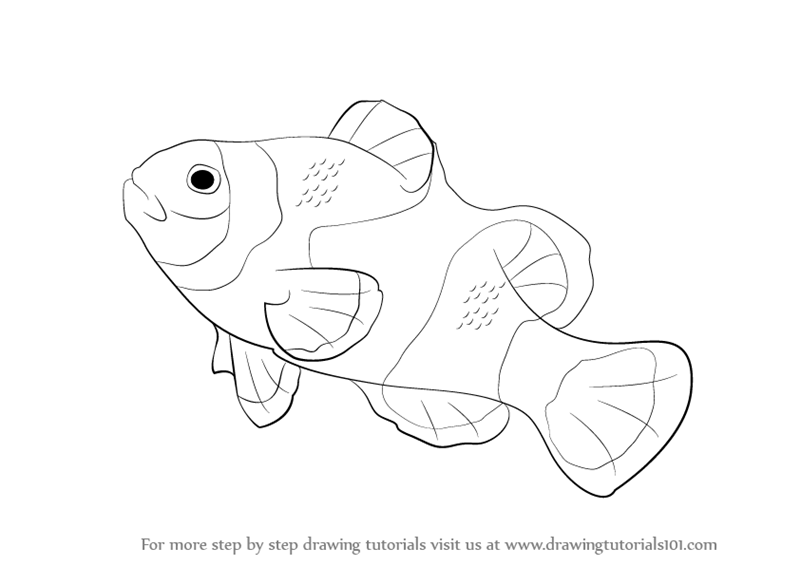 800x566 Learn How To Draw A Clownfish (Fishes) Step By Step Drawing